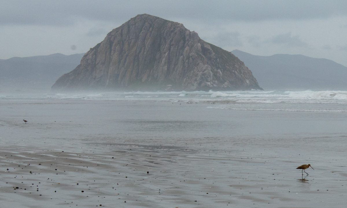 Morro Rock in the distance on a gold, wet, cloudy day at Morro Bay Beach in California